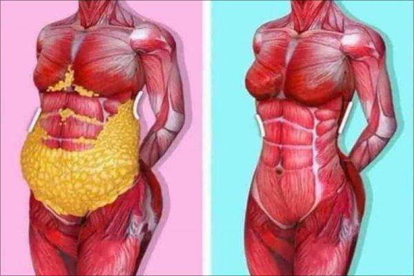 Nguyên lý đốt mỡ của cơ thể trong quá trình giảm cân