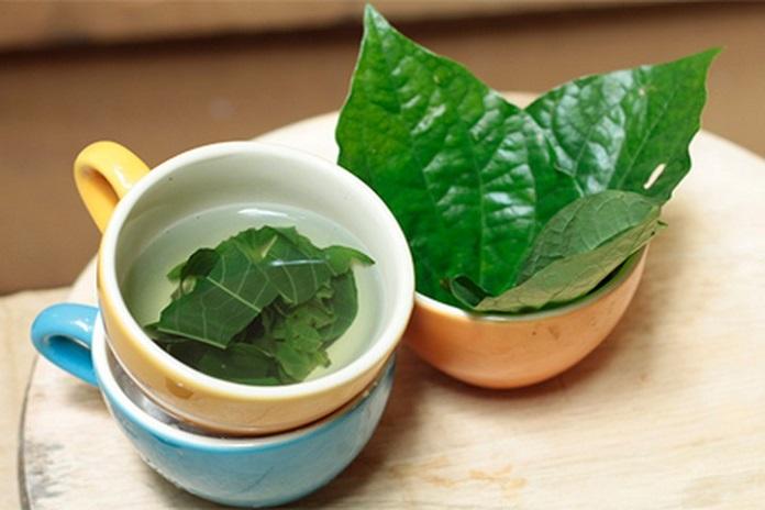 Các loại cây chữa bệnh gout hiệu quả