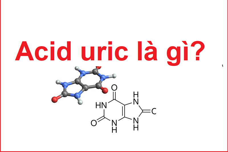 Acid Uric là gì?