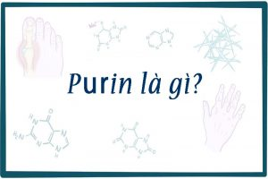 Hàm lượng Purin lớn là nguyên nhân đẫn đến tích tụ Acid Uric gây ra bệnh gout