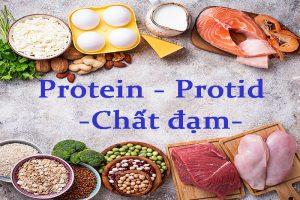 Tại sao cần phải bổ sung protein cho cơ thể?